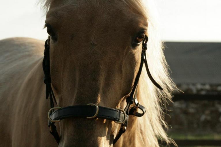 Vrouwen, paarden en emoties gesprek Klaus Hempfling