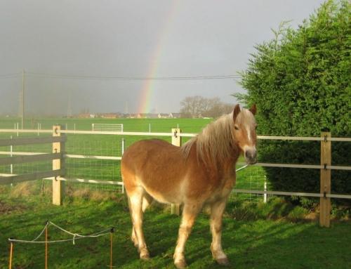 Communiceren met paarden vanuit je lichaamsbewustzijn