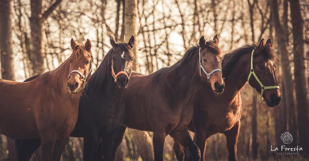 angst paardrijden