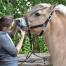 paardentandarts-gebitsverzorger-verschil