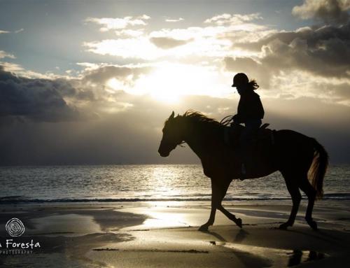 Hoe ga je om met frustratie tijdens het paardrijden? *tips*
