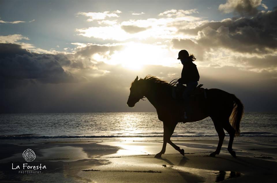 frustratie-paardrijden