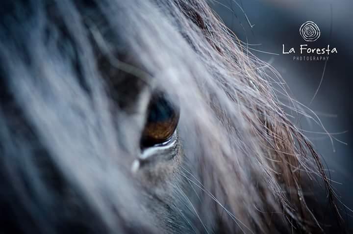 Angst voor paardrijden
