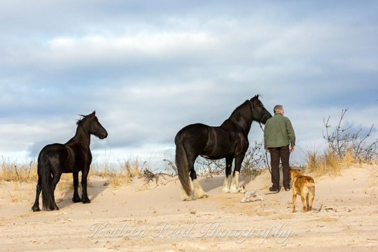 groei-paarden