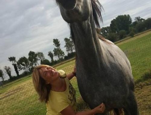 Natuurgeneeswijzen voor je paard
