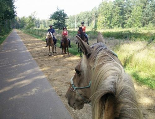 Paardrijden in de Gerhaagse bossen