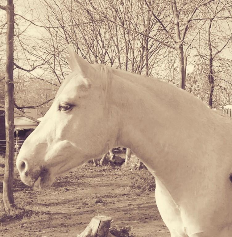de boodschap van het paard