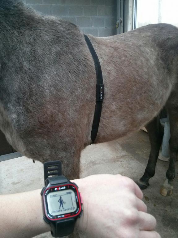 Hoe kan een hartslagmeter helpen bij het opbouwen van de conditie van je paard?