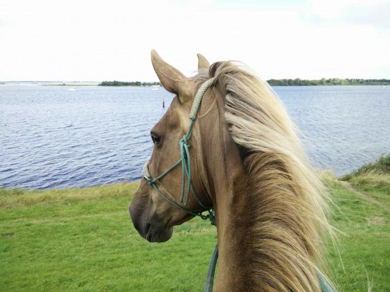 paardrijden-aan-zee