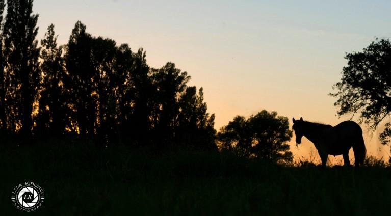zonsondergang met de kudde