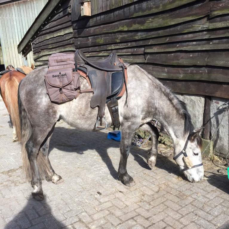 paardeninstructie