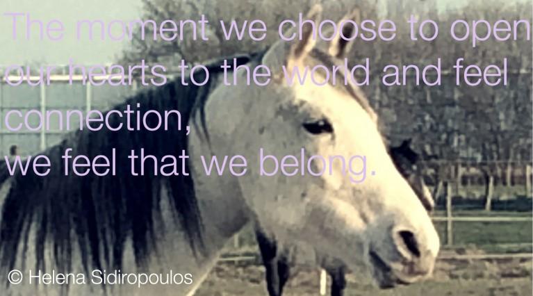 paarden zijn liefde