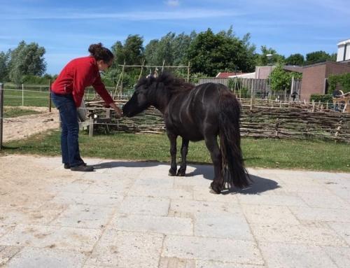 Wederzijds respect in je paardenrelatie