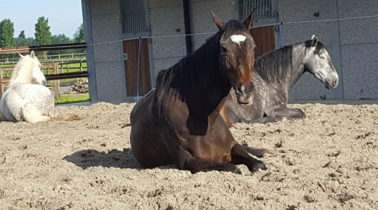 Help! Mijn paard is depressief