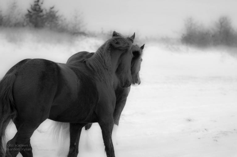 ziel van je paard en een dieper contact