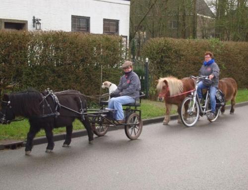 Het paard als verkeersdeelnemer