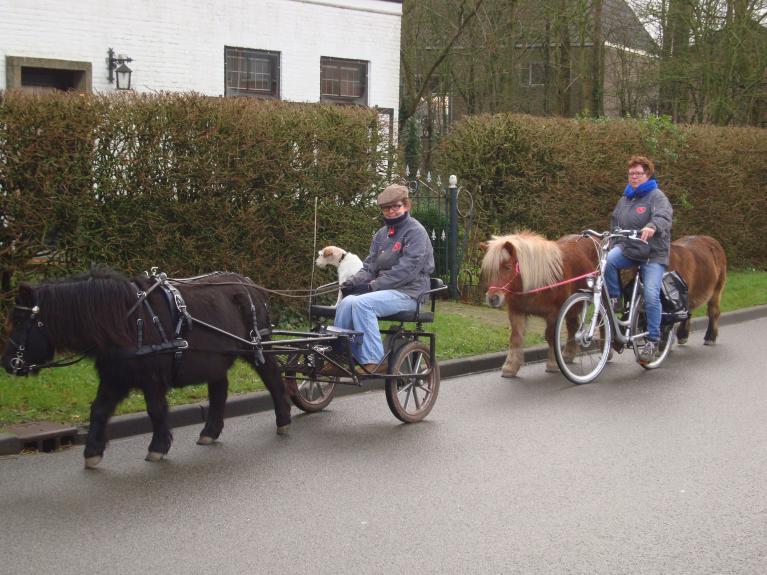 Paard-in-het-verkeer