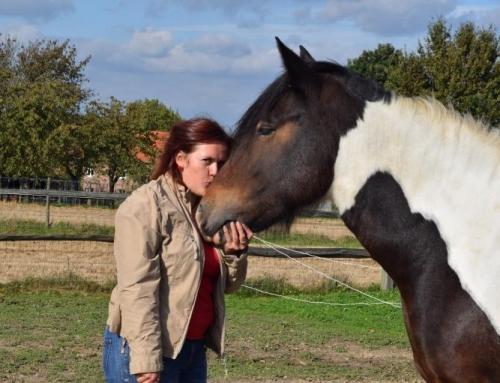 'Ver-wonder-ing' over wat paarden ons tonen…