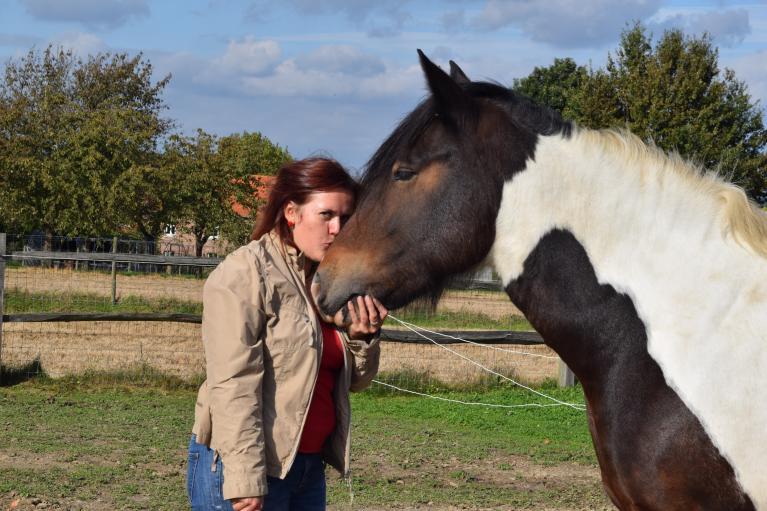 wat-paarden-ons-tonen
