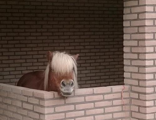 Ieder mens en paard zijn eigen hokje?