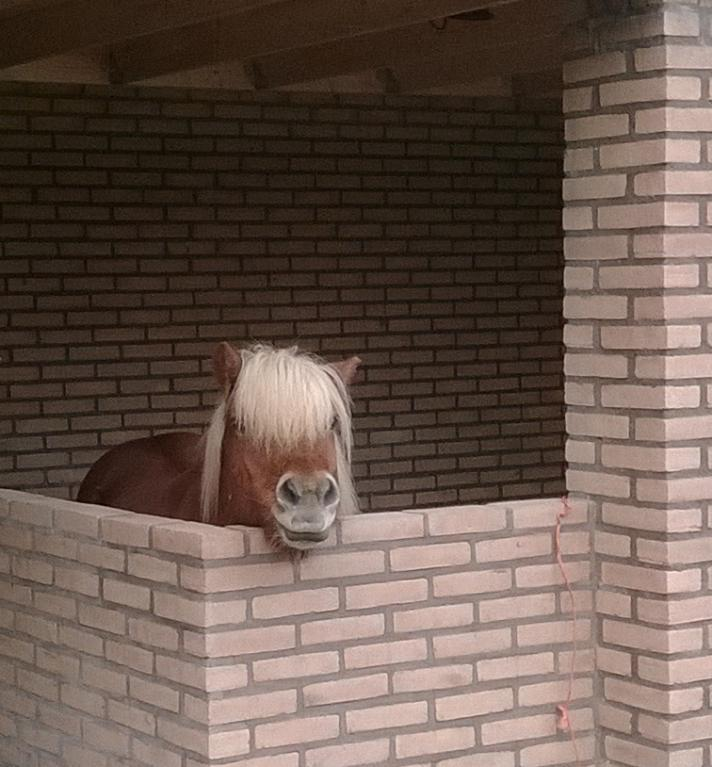 Hokjes-paard-mens