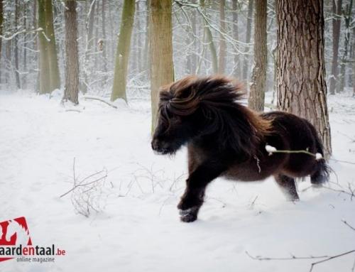Winterpret in de paddock: hou het veilig voor je paard.