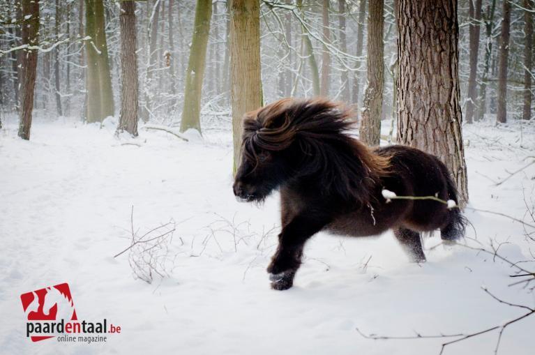 paard-sneeuw
