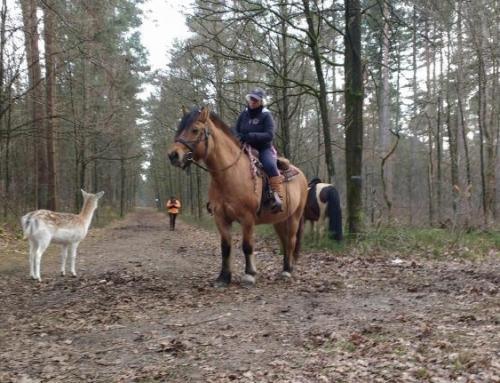 Wat als je paard een vriendschapsband sluit met een hert? *video*