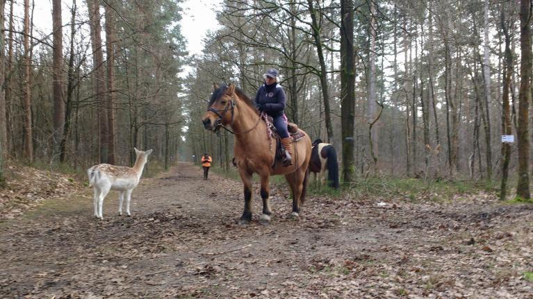 paard sluit vriendschapsband met hert