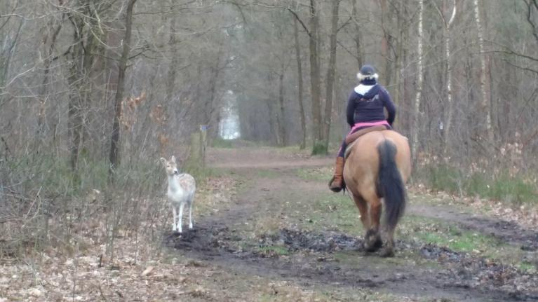 vriendschapsband paard en hert op buitenrit