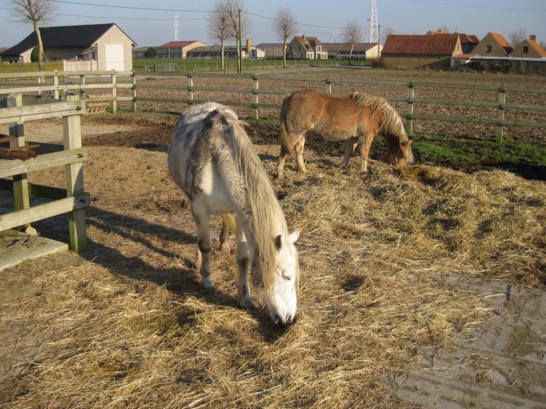 verbeter-je-mentale-fitheid-paardenliefhbber