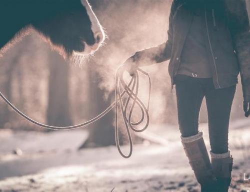 Hoe leer ik mijn paard volgen? *video*