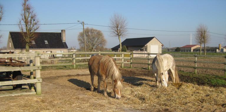 verbeter je mentale fitheid als paardenliefhebber