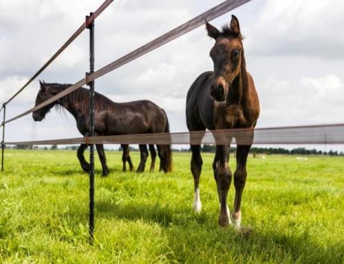 Is jouw paardenafrastering nog in topconditie?