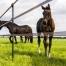 afrastering-paardenweide-topconditie