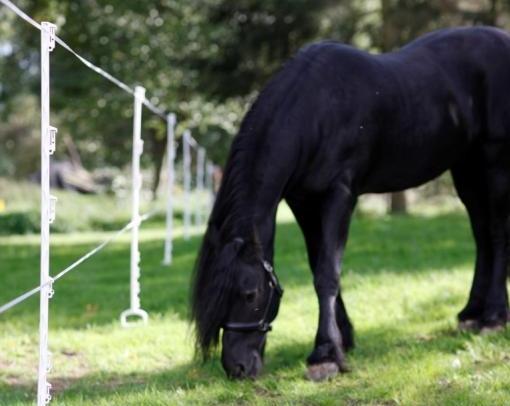 mobiele-afrastering-paardenweide-stijgbeugel-palen