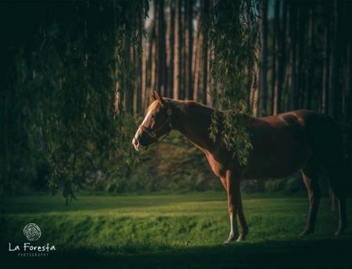 Vanuit innerlijke kracht verbinding met je paard