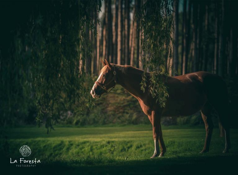 verbinding-met-je-paard